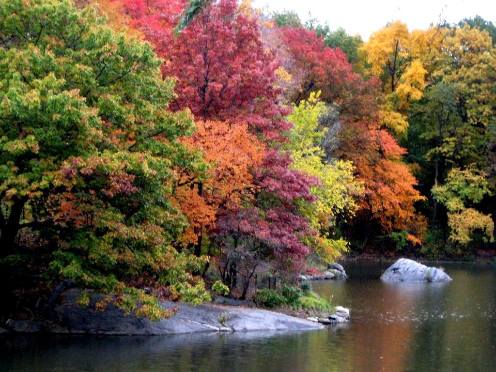 Flot, kombineret beplantning i Central Park i New York